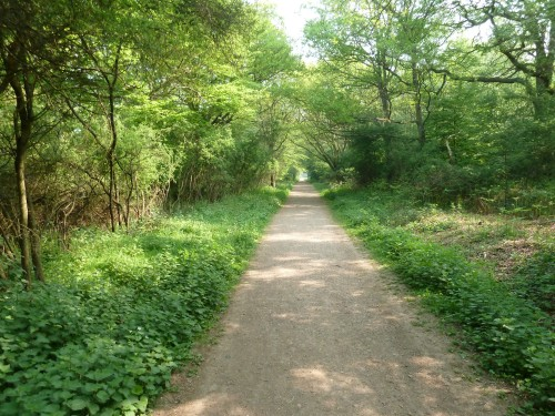 Epping Forest typical pathway april 2011