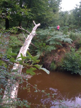 The Opposite Side OF Highland Water Ancient Woodland Trails New Forest Walking Route Hampshire Walks