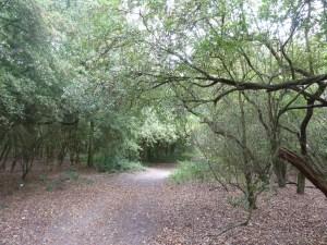 Three Forests Way in Hainault Forest - WalksAndWalking Essex Walks