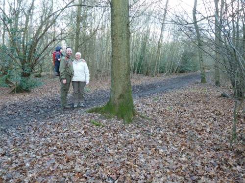 Hertfordshire Walks Hertford Heath Walking Route at Golding's Wood