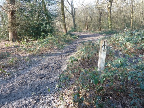 Walks And Walking - Essex Walks Epping Forest - The Hawk Wood
