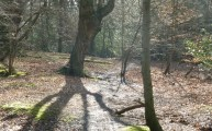 Walks And Walking - Essex Walks - Epping Forest - High Beach - Walking amongst the shadows in the trees