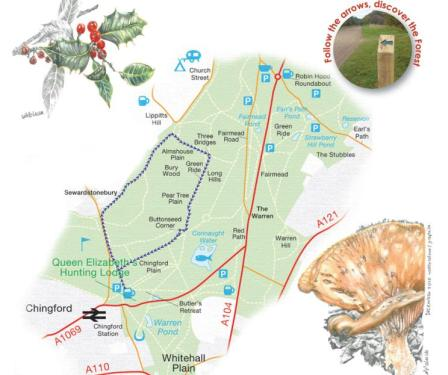 Walks And Walking - Essex Walks Epping Forest Holly Trail Walking Route