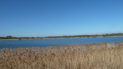 Walks And Walking - Kent Walks Sturry To Sandwich Walking Route - Stodmarsh National Nature Reserve