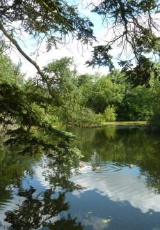 Walks And Walking – Epping Forest The Chestnut Trail Walking Route Lake