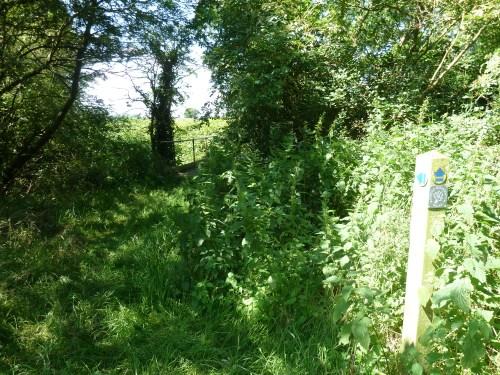 Walks And Walking - Essex Walks Epping Forest District Walking Route - Bassett Millenium Walk