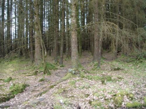 Walks And Walking - Wales Walks Coed y Brenin Forest Park - Unpenetrable pine forest