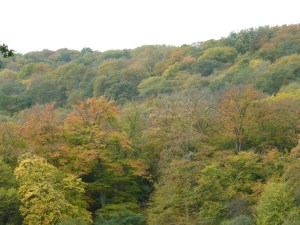 Walks And Walking - Essex Walks The Oak Trail Epping Forest Walking Route - Autumn Trees