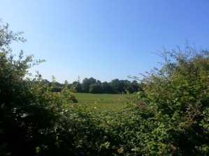 About Epping Forest