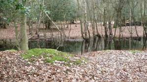 Walks And Walking - Essex Walks Epping Forest Gifford Wood Walking Route - Jacks Hill