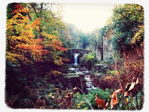 Top 5 countryside attractions to enjoy walking in the north-east - Jesmond Dene