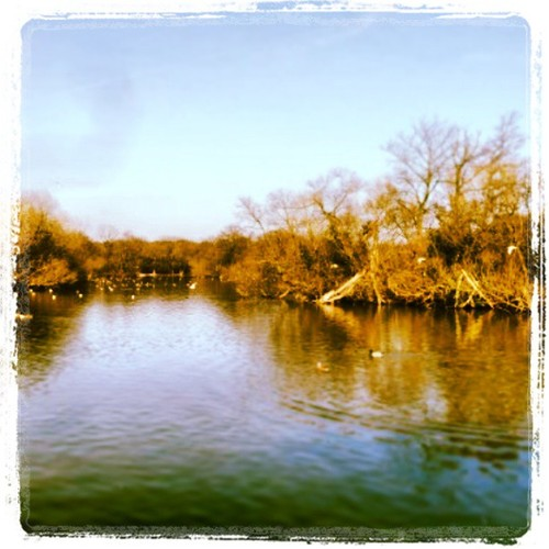 Walks And Walking - Best New Spring Walks In Epping Forest For 2013 - Connaught Water