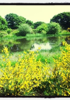 Walks And Walking - Epping Forest Hornbeam Trail - Hollow Ponds Snaresbrook