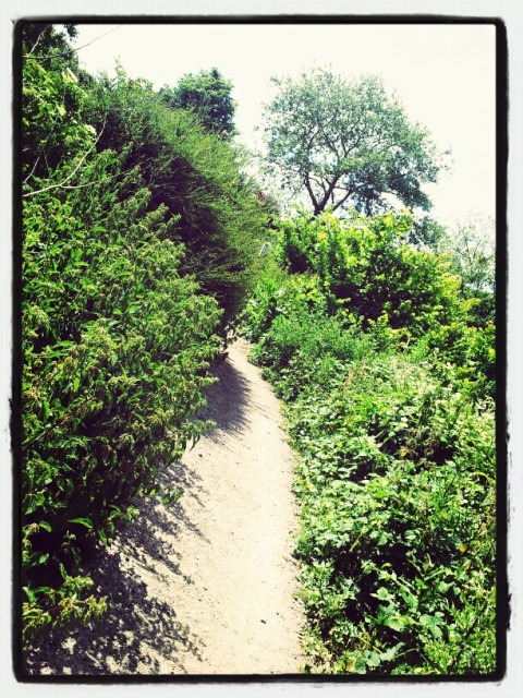 Walks And Walking - Kent Walks Whitstable Coastal Walking Route - Prospect Fields Path