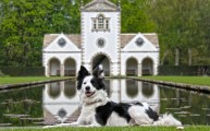 Walks And Walking - Dog Walking in Bodnant Garden National Trust - Bodnant Copyright Dan Struthers Photography