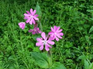 Walks And Walking - The Ramblers Get Walking Week - Wild Flowers
