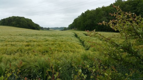 Walks And Walking - Elham Walk in Canterbury Kent - Elham Valley Kent Downs