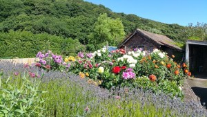 HF Holidays 4 Mile Family Circular Walk From Holnicote House - Allerford Woods Allotment Gardens
