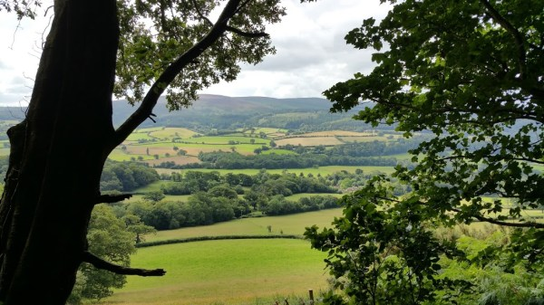 HF Holidays 4 Mile Family Circular Walk From Holnicote House - Woodlands Views Out To Exmoor National Park