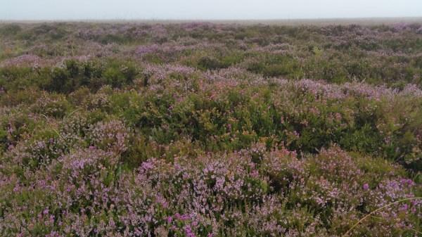 HF Holidays 11 Mile Linear Hard Walk to Dunkery Beacon - Moorland