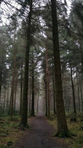 Darwin Forest Country Park Pinetum