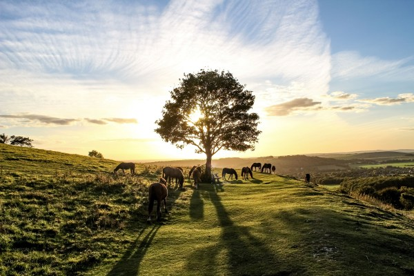 Pony Heaven - a view of Cissbury Ring in the South Downs National Park by Joe James.