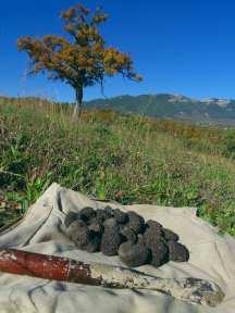 Italian truffles