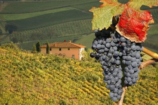 Chianti wine in Tuscany