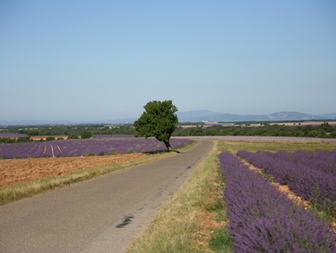 View during our landscape painting workshop in Provence