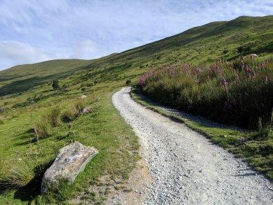 Snowdon_Ranger_Path_15
