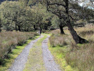 lon gwynant snowdonia (108 of 232)