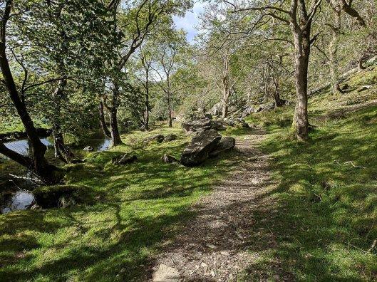 lon gwynant snowdonia (76 of 232)