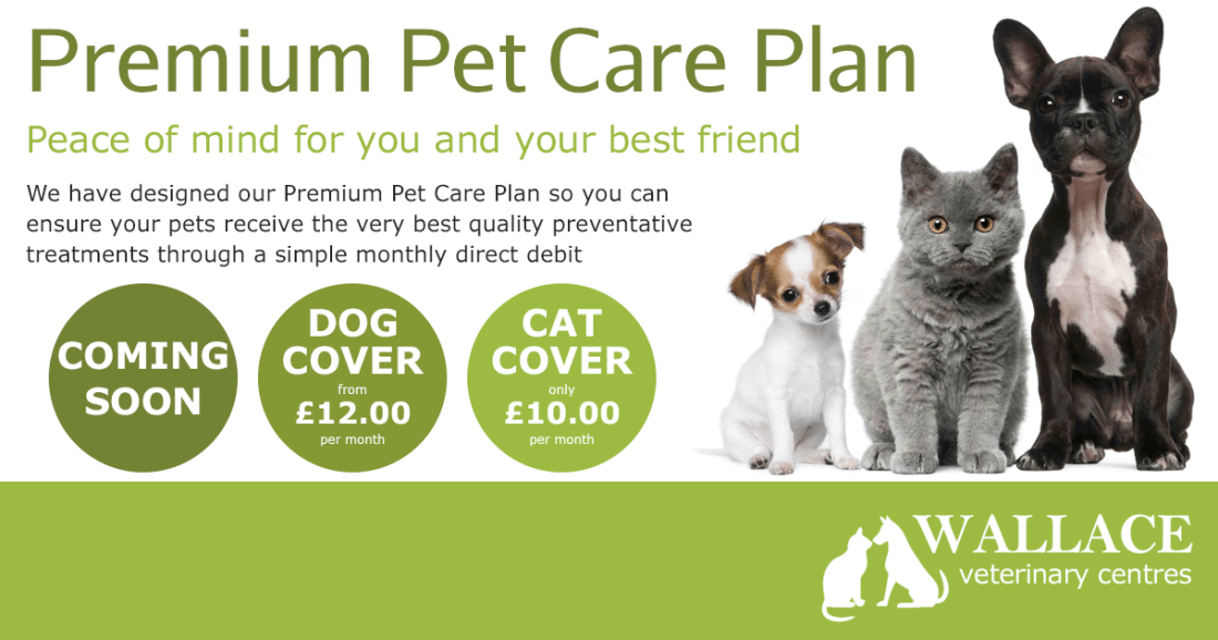 Blog Image - Care Plan
