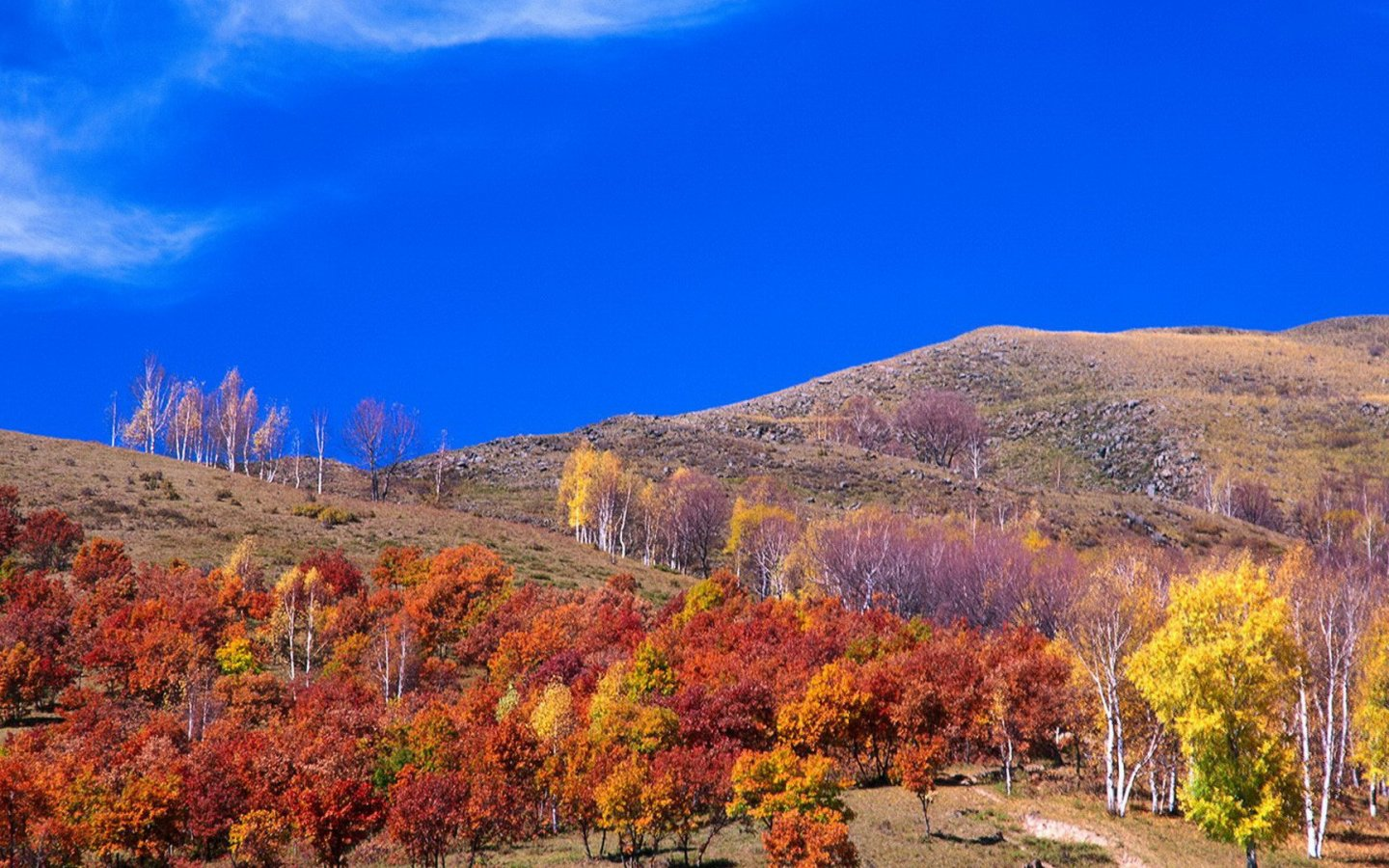 Tree Forest Autumn Yellow Leaf Red Leaf Mountain Hillside