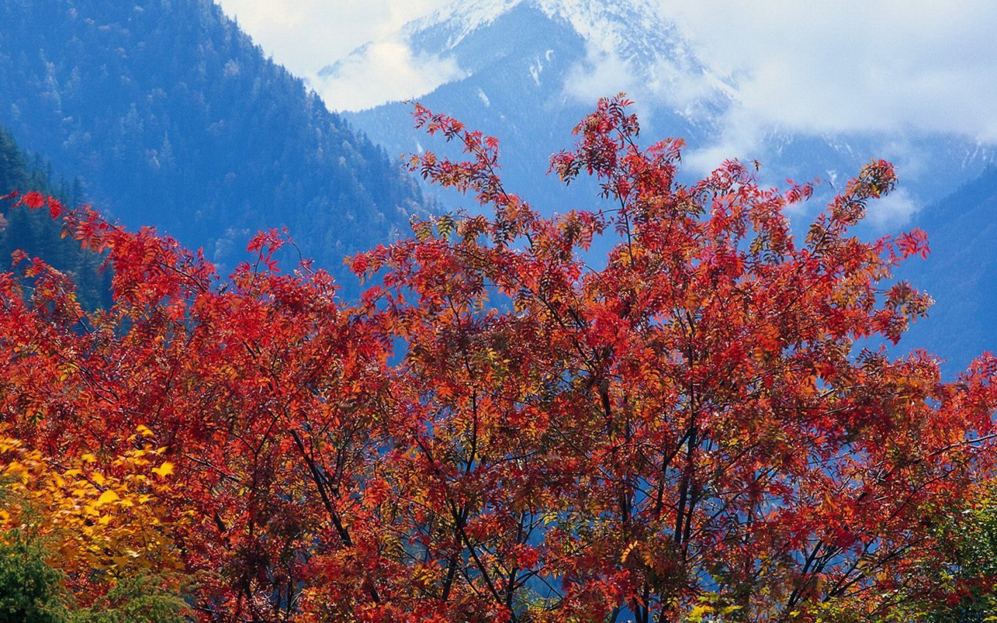Tree Forest Autumn Yellow Leaf Red Leaf Snow Mountain