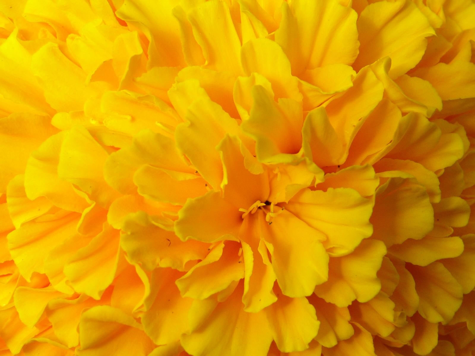 Fond d'ecran Fleurs
