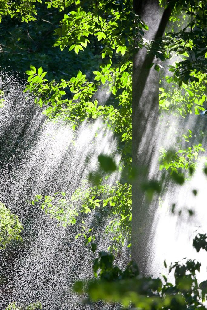 Falling Water, National Arboretum, Washington, DC
