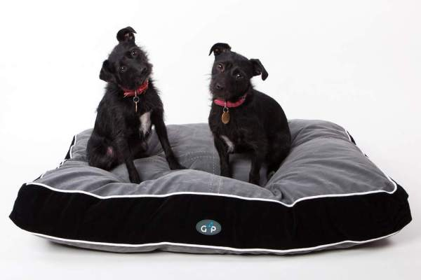 Two dogs on a Wallops Wood dog bed which we provide for free