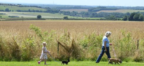 A stroll in the beautiful countryside with your dog and family