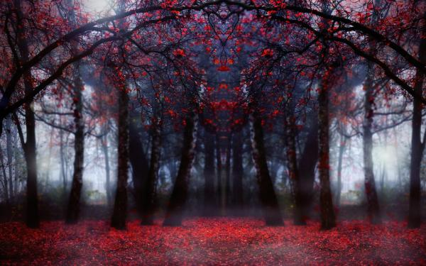 Magical Red Forest In Focus wallpaper | nature and ...