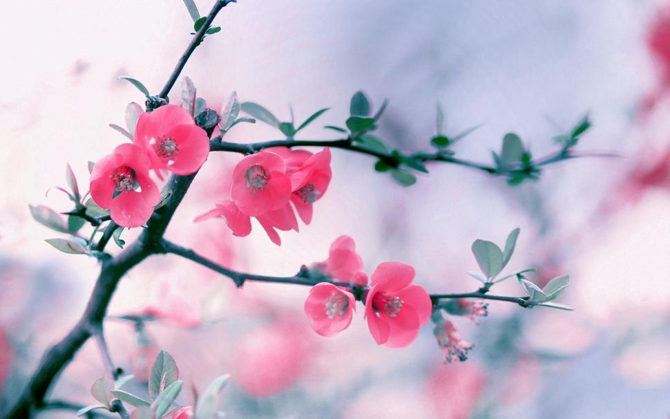 Focus pink flower hd wallpaper wallpaper,flower HD wallpaper,focus HD wallpaper,hd wallpaper HD wallpaper,pink HD wallpaper,1920x1200 wallpaper