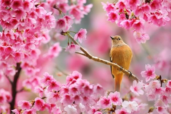 Nature, Bird, Animals, Flowers, Plants, Depth of Field ...