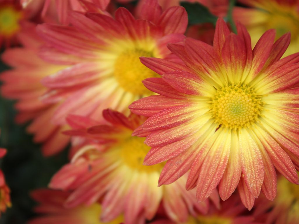 Pink Bright Yellow Flower Color 2560x1600