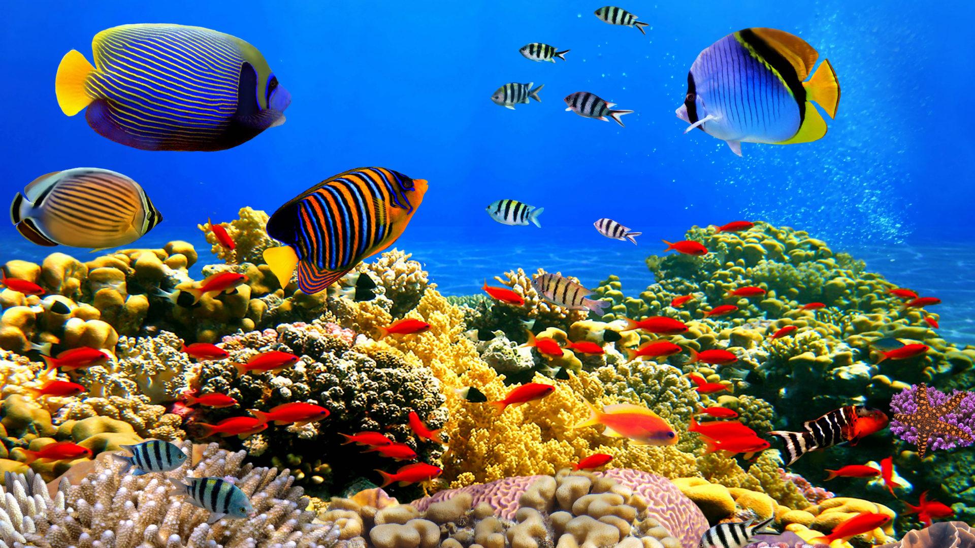 Underwater World Corals Tropical Colorful Fish Hd Desktop