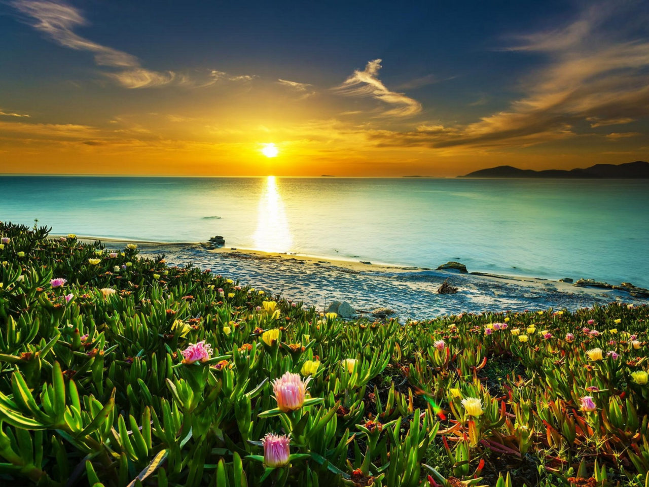 Sea Coast Meadow With Tropical Flowers Sandy Beach Calm Sea Orange Sky Sunset Hd Wallpapers For