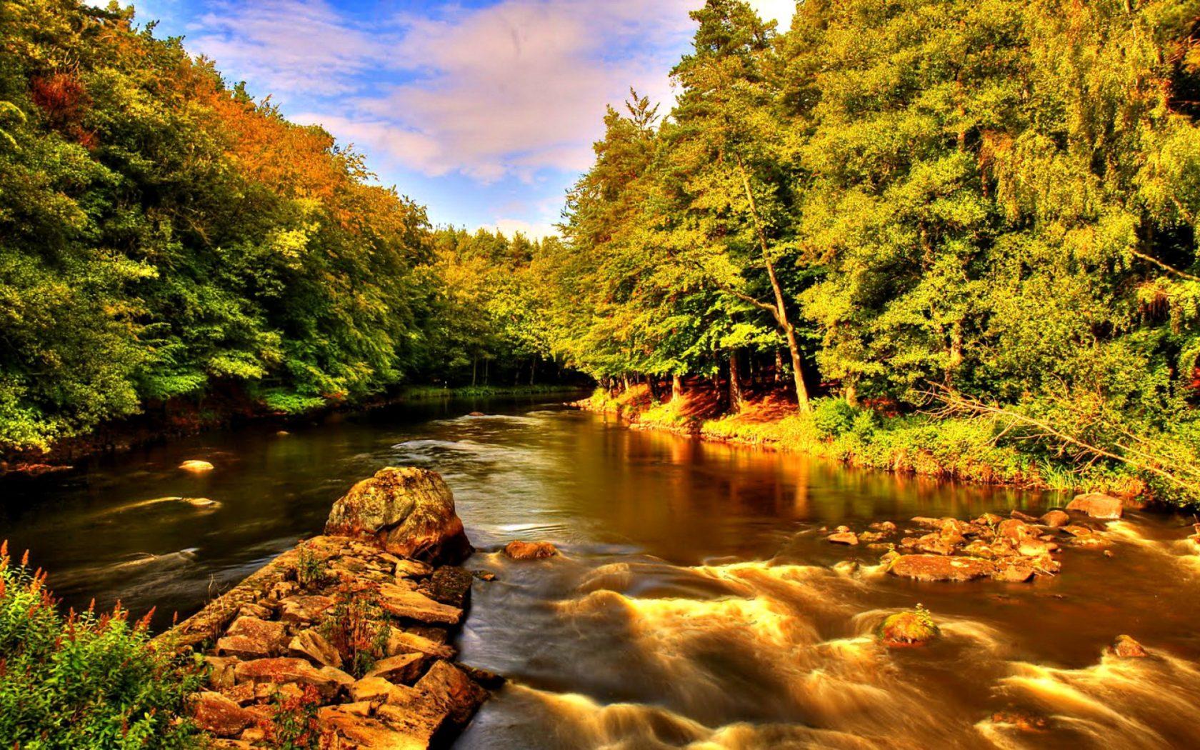 Beautiful Nature Summer River Creek Shore Trees Rocks