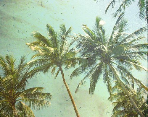 Download Vintage Palm Tree Wallpaper Gallery