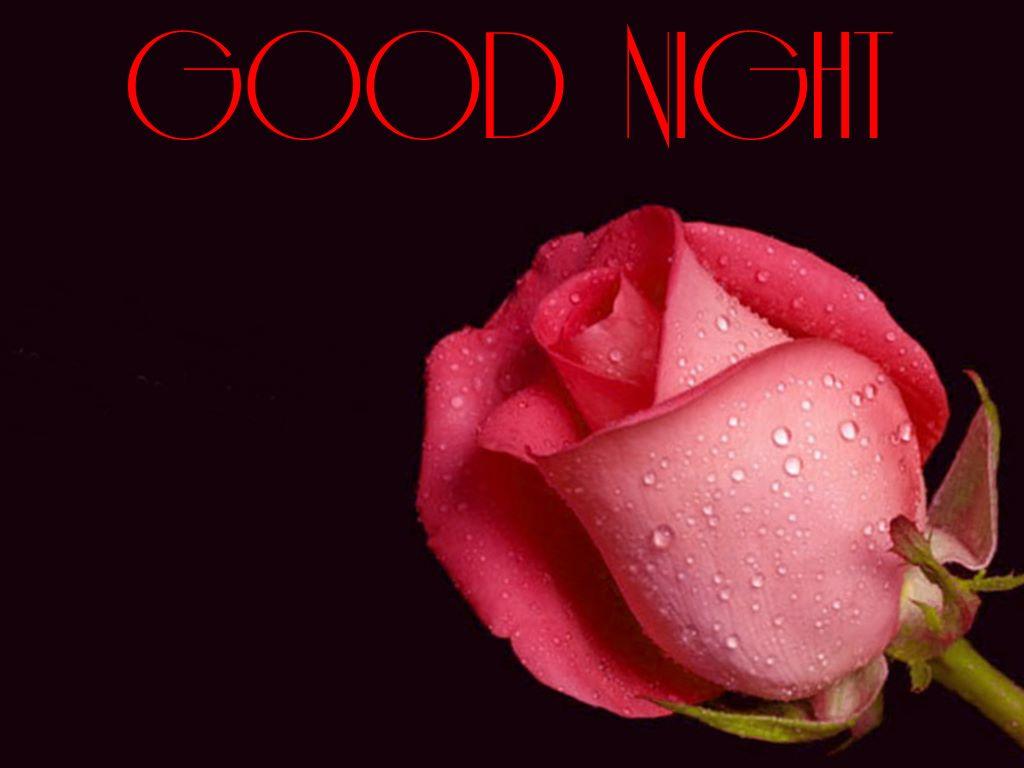 Good Night Images Flowers Rose Kayaflowerco