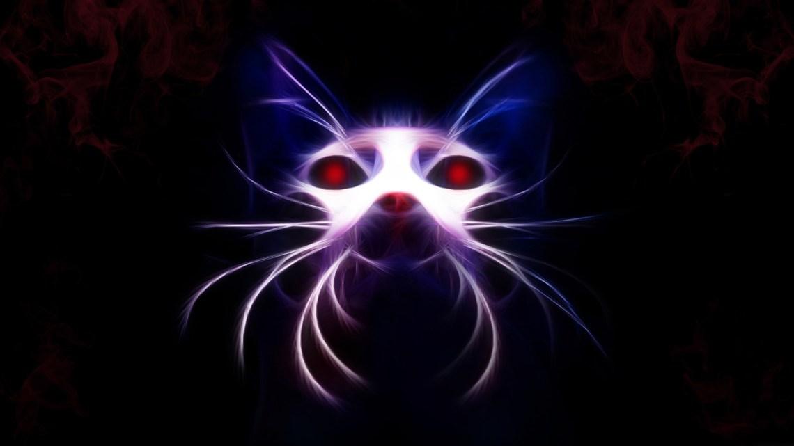 Dark Cat Wallpaper Cute Anime Cats Blue 1920x1080 Download Hd Wallpaper Wallpapertip