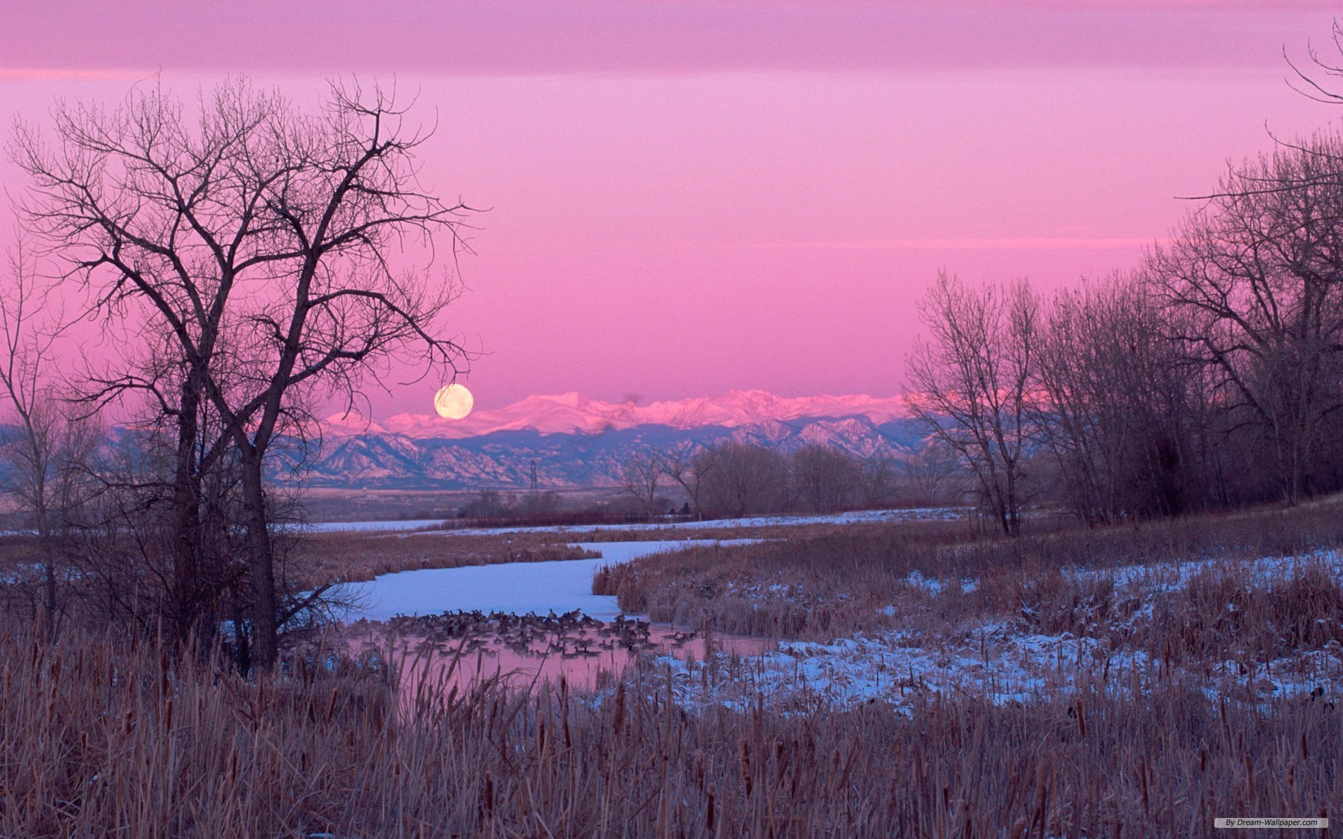 Desktop wallpapers 521 photos · curated by hamad shafqat. Free Nature Wallpaper - Aesthetic Pink Nature Background ...